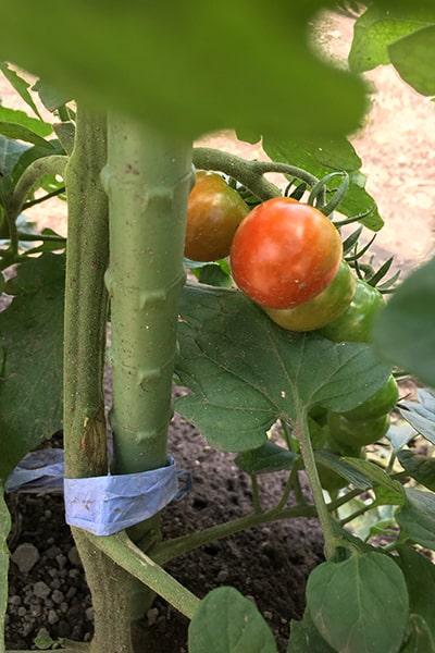 tomato-min.jpg